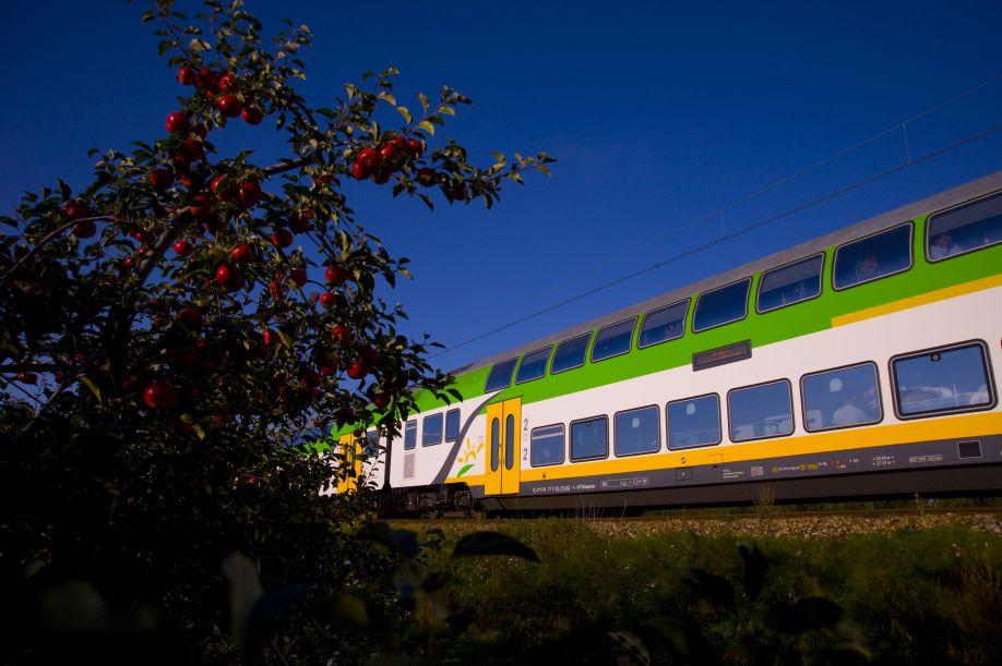 Koleje Mazowieckie zakupią 55 nowych pociągów od Stadlera
