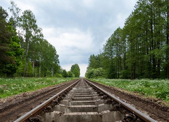 Drzewa przy liniach kolejowych zostaną uratowane